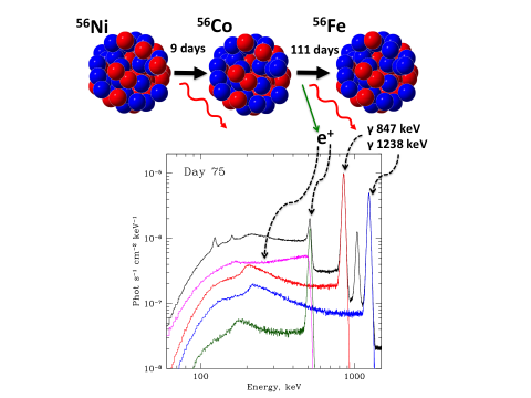 Рис 1. Цепочка распадов 56Ni => 56Co => 56Fe  высвобождает большое число гамма-квантов и позитронов. На начальном этапе расширения оболочки (10–20 дней) гамма-кванты «гибнут» в оболочке сверхновой, нагревая ее и вызывая свечение оболочки и оптическом диапазоне. Позднее оболочка становится прозрачной и гамма-кванты имеют возможность выйти из оболочки. Спектр излучения сверхновой формируется из гамма-линий, их комптонизированного излучения и излучения аннигиляции позитронов © ИКИ РАН
