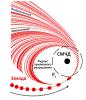 Схема разрушения звезды под действием приливных сил вблизи сверхмассивной черной дыры. Изображение (с) И.Хабибуллин, ИКИ РАН, 2020